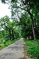 Campus Road - Academic Complex - University of Burdwan - Bardhaman 2015-07-24 1324.JPG