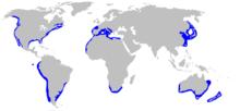4. Ареал обитания Большой Белой Акулки.  Профиль.