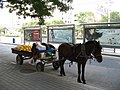 Carriage horse in Beijing.jpg