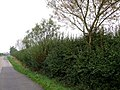 Carter's Lane near Woad Hill - geograph.org.uk - 261827.jpg