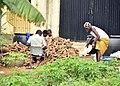 Cassava processing., the local ways of processing cassava in Africa, Nigeria 01.jpg