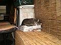 Cat - panoramio (4).jpg