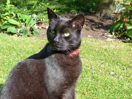 Cat Is Microchipped Owner Changed Name