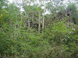 Catherineberg Sugar Mill Ruins - Catherineberg Sugar Mill Ruins, overgrown, unrestored area.