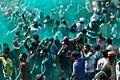 Celebration of Holi 3 (26013191605).jpg