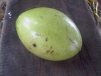 Cerbera manghas - Image: Cerbera manghas fruit
