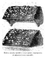 Champignon petites meules mobiles Vilmorin-Andrieux 1904.png