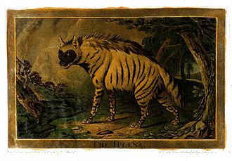 Animals Drawn from Nature and Engraved in Aqua-tinta - Image: Charles Catton, Animals (1788) Page 36 Image 1