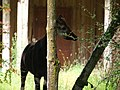 Chester Zoo (14548682077).jpg