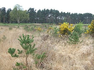 Chobham Common located near Chobham, Surrey, location of a British tank research centre