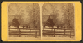 City square buried in snow. Newton, Iowa, from Robert N. Dennis collection of stereoscopic views.png