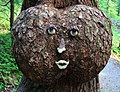 Clever face applied to a burl on a tree on the Winner Creek trail (3823675884).jpg