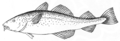 Cod (PSF).png