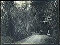 Collectie Nationaal Museum van Wereldculturen TM-60062341 Landweg met koets Trinidad fotograaf niet bekend.jpg