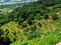 Collina di Montevecchia fianco .jpg