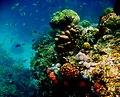 Colorful underwater world, Mabini Batangas - panoramio (7).jpg