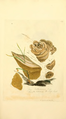 Coloured Figures of English Fungi or Mushrooms - t. 182.png