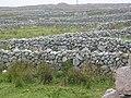 Conamara Stone Walls - geograph.org.uk - 68942.jpg