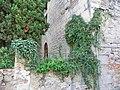 Construcció medieval a Sant Feliu Sasserra - panoramio.jpg