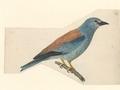 Coracias garrula - 1840 - Print - Iconographia Zoologica - Special Collections University of Amsterdam - UBA01 IZA1000581.tif