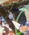 Costa Rica DSCN1209-new (30322910243).jpg