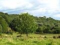 Cows near Washer Lane - geograph.org.uk - 2054707.jpg