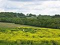Cripps Corner from Hurst Lane, Sedlescombe (geograph 5363031).jpg