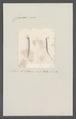 Criseis gadus - - Print - Iconographia Zoologica - Special Collections University of Amsterdam - UBAINV0274 080 07 0026.tif