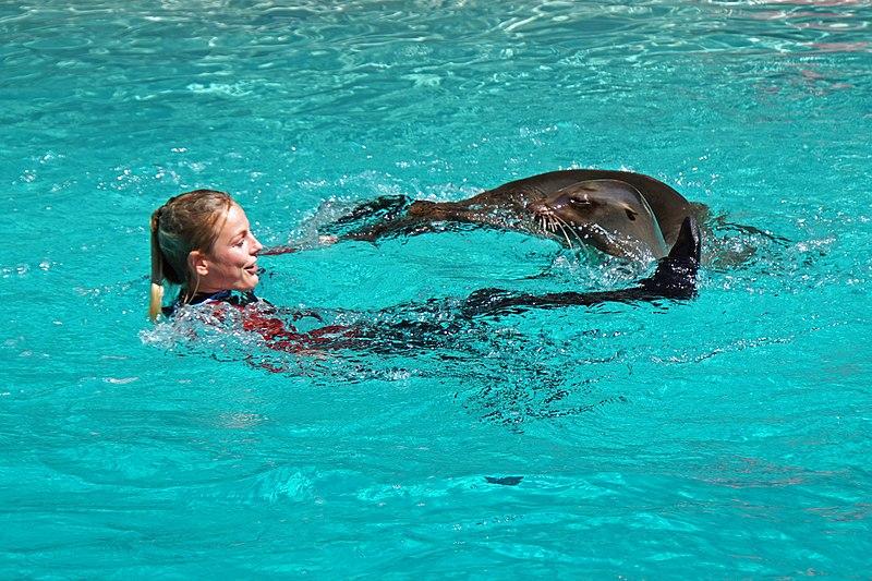 File:DSC09265 - Who Swims Better..... (37223438045).jpg