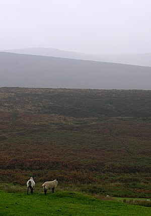 Hill farming - The Dartmoor sheep is a type of livestock found on hill farms
