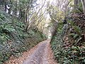 Deep set lane near Over Stratton, Somerset - geograph.org.uk - 623859.jpg