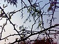Deer Park Branches.jpg