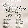 Diagram of German Shepherd Dog.jpg