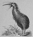 Die Gartenlaube (1886) b 317 2.jpg