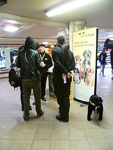 Free Dog Neutering Mesa Az