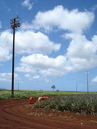 Wahiawa, Hawaii - Image: Dole Pineapple Plantation Field
