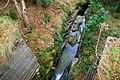 Donard Forest, Newcastle (8) - geograph.org.uk - 640814.jpg