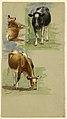 Drawing, Cattle, Steers, 1875–80 (CH 18369135).jpg