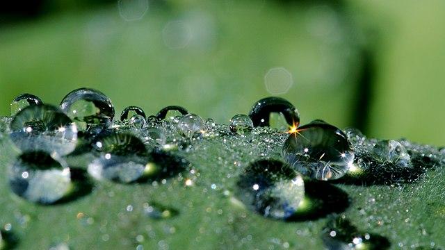 Pflanze mit wasserabweisender Oberfläche