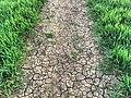 Dry Fields (34146145092).jpg