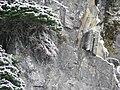 Dwarf fir, roots, and rock (9fc3e05b9c724b19b08335c6f3624e45).JPG
