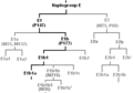 E1b1a ancestry.png