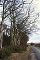 Edge of Kinghorn Wood - geograph.org.uk - 1172428.jpg