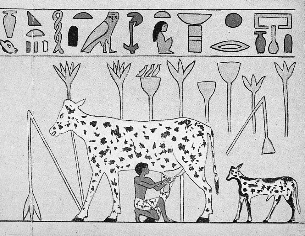 Egypt, man milking a spotted cow, c. 2000 B.C., Wellcome M0010367