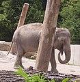 Elefantchen im Heidelberger Zoo - panoramio.jpg