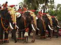 Elephants - 2008 Kerala festival.jpg