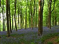 Embley Wood - geograph.org.uk - 800669.jpg
