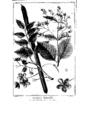 Encyclopedie volume 5-160.png