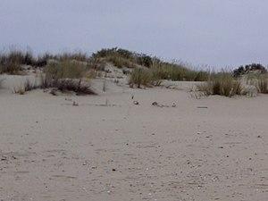 Enebrales desde la playa.jpg