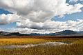 Ephemeral pond (5727681513).jpg